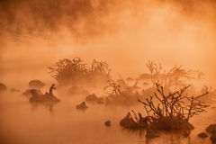 Snags in the river water in early winter morning. Red - orange fog backlit by mystical sunlight Royalty Free Stock Photos