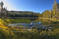 Snags, stubs and dry trees on  lake in mountains Stock Photography