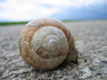 Snail. A snail traveling on the asphalt road Stock Image