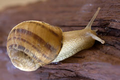 Snail 1 Stock Images