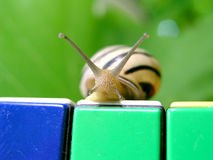 Snail 1. Snail's look Stock Image