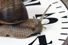 Snail. Edible snail crawling along the clock Royalty Free Stock Image