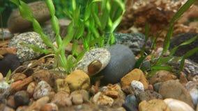 Snail Arkivfoto