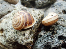 Snail. Large type several snails on stone at year day Stock Photography