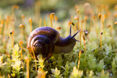 Snail,. Snail on the grass summer Stock Image