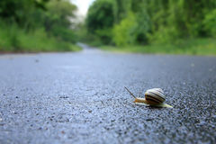 A snail Royalty Free Stock Photography