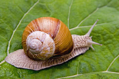snail royaltyfria bilder