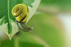 Free Snail Stock Photos - 18262053