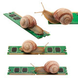 Snail. On memory isolated on a white background Stock Image