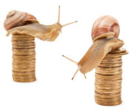 Snail. S on a pile of golden coins isolated on white background Royalty Free Stock Photos