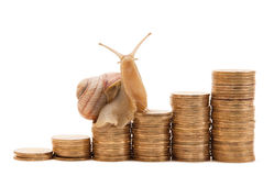 Snail. A snail crawling on a schedule of coins isolated on white background Stock Images