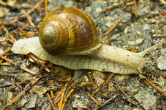 Snail 2 stock images