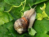 Free Snail Stock Photo - 20154460