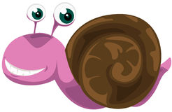 Snail Stock Images