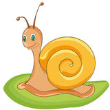 Snail. Funny snail on the lawn Stock Photography