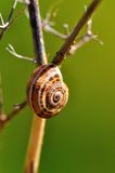 The snail Royalty Free Stock Photo