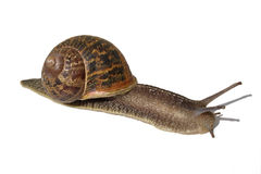 Snail Stock Photos