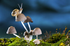 Snail. A small snail on the mushroom Royalty Free Stock Image