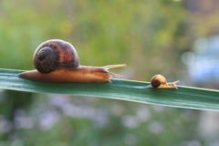 Free Snail Stock Images - 26333904