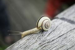 The snail Stock Photos