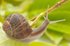 Free Snail Stock Photos - 27520793