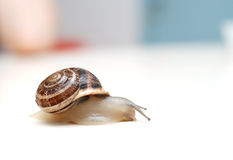 Snail. Close up to snail on white background Royalty Free Stock Image