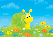 Snail. Funny snail in green grass among field flowers Stock Photo