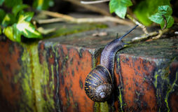 Snail. In the garden at spring time Royalty Free Stock Images
