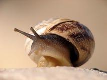 A snail Stock Photo