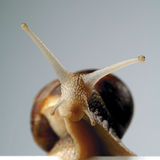 Snail. Portrait of a snail royalty free stock photos
