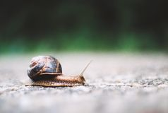 The snail. If you go too slow you will never know where you go Royalty Free Stock Photography