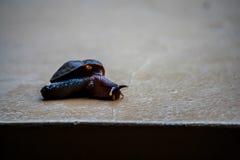 Snail Royaltyfri Foto