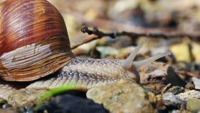 Snail stock video