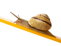 Snail Royalty Free Stock Photos