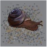 Snail vektor illustrationer