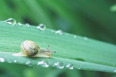 Free Snail Stock Images - 53541734