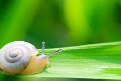 Snail. The snail on a leaf of a plant in a garden Royalty Free Stock Photography