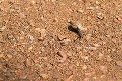 Snail-1 photographie stock libre de droits