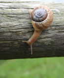 Snail. A little friend that I came across one day royalty free stock photo