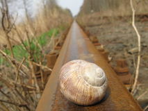 Snail. On the railway Royalty Free Stock Photography