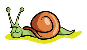 snail Vektor Illustrationer