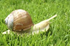Snail. In a garden Stock Image