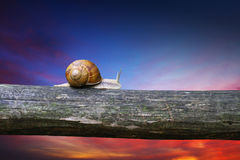 Snail. Moving on the piece of wood Stock Photography