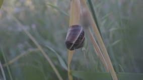 Snail lager videofilmer