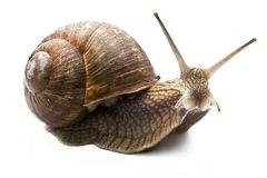 Free Snail Stock Photos - 9643673