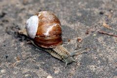 Snail Royaltyfri Bild