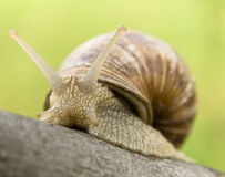 Snail. On a green background Stock Photo