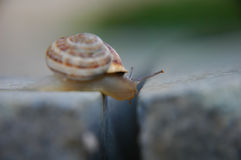 Snail above chasm Royalty Free Stock Photo