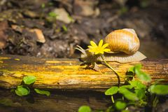 Snail above water on branch Royalty Free Stock Image