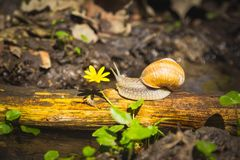 Snail above water on branch Royalty Free Stock Photo
